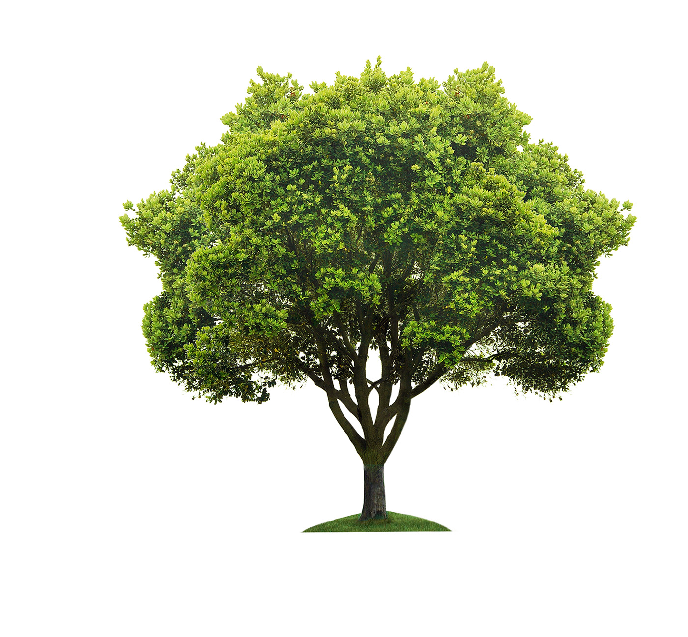The tree for my borough campaign has been extended eco quartier ndg - Tree images free download ...